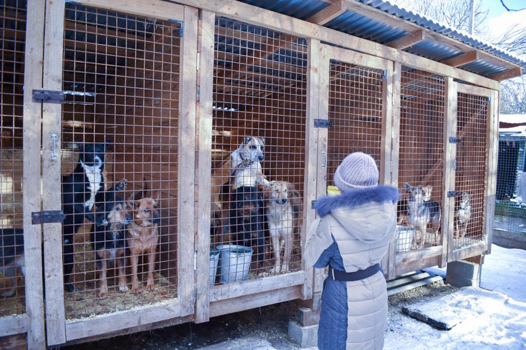 Минстрой России разработал правила проектирования и строительства приютов для животных